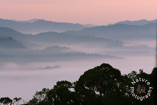 A Tree House Sunrise at Nam Kan National Park, Bokeo Province, Laos  (©Irina Medvedev).