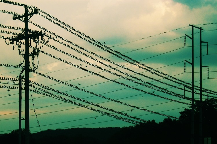 how do birds sit on power lines without getting electrocuted alum rh alum mit edu Electrical Cable Types of Electrical Wire