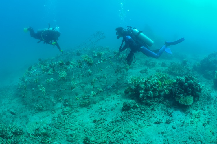 Underwater shot of two divers above an artificial coral reef
