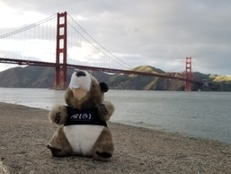 Tim the Beaver in San Francisco